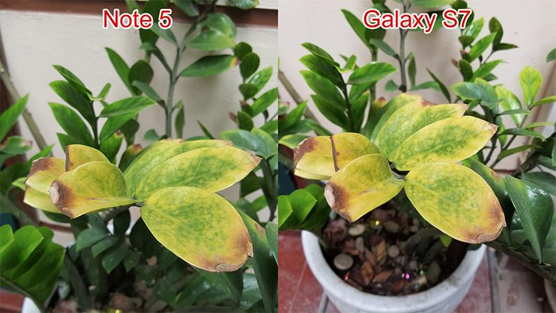 so sánh camera của Note 5 và S7 2